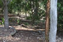 The entrance to the easy rainforest track, a great place to cool down on a hot day.