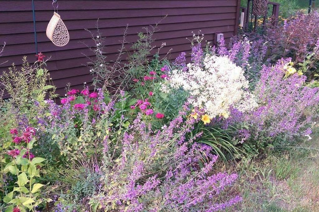 Beautiful flowers attract butterflies and birds.