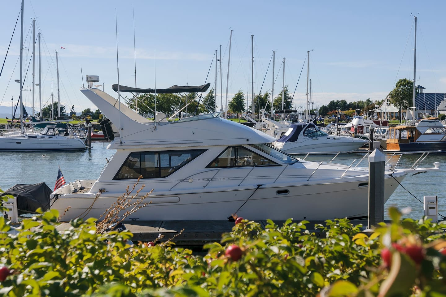 Image result for yacht and boat rental