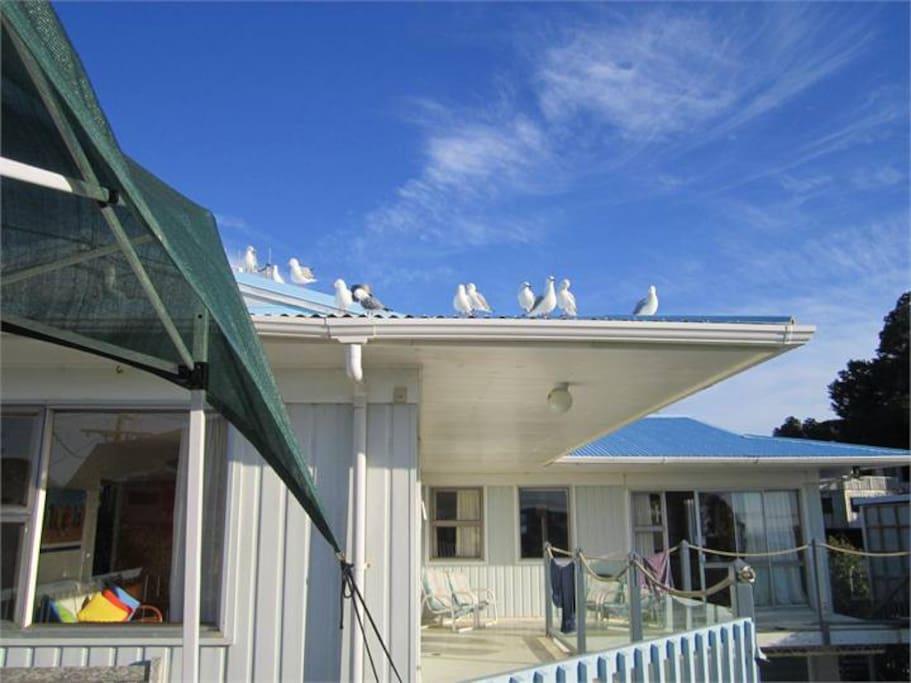 True kiwi beach house!