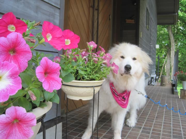 愛犬OK!朝食サービス中!連泊でよりお得なB&B、森のお宿ぴるちゃー(和室A)