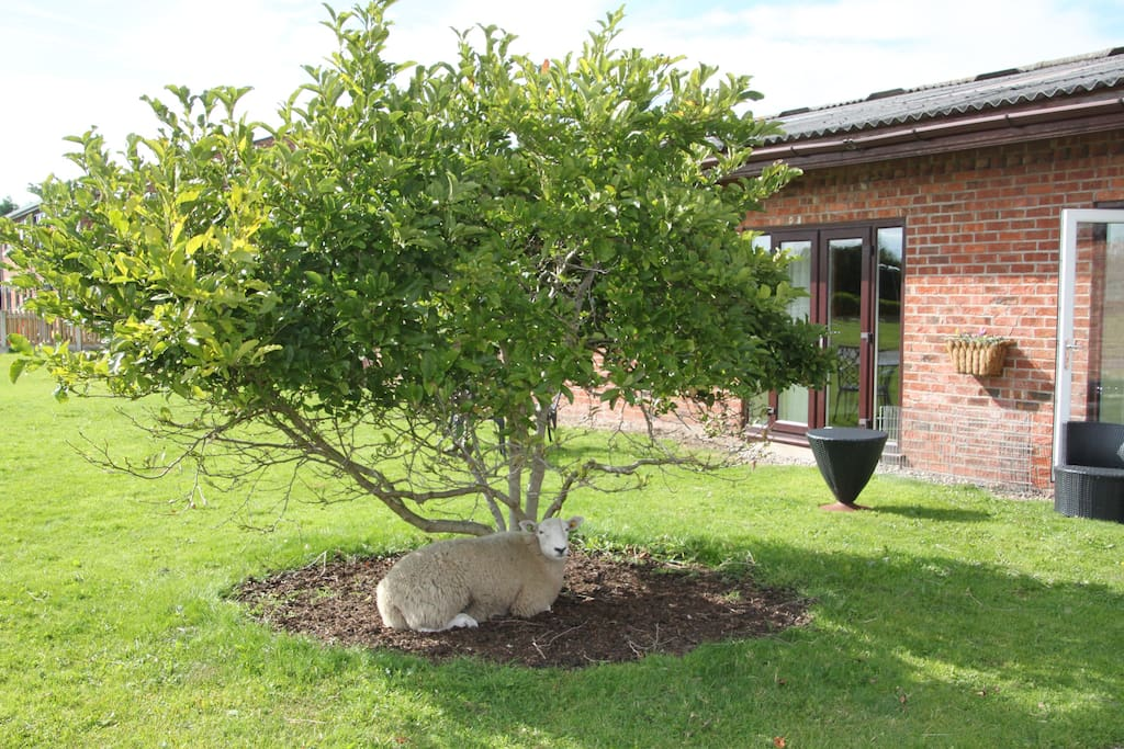 This cottage is adjacent to our other listing, (see Formby Point for views of the land) Peaches, the lamb is very at home.