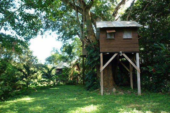Parrot Nest Treehouse 2 - Bullet Tree Falls - Tretopphus
