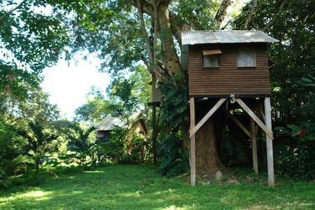 Parrot Nest Treehouse 2 - Bullet Tree Falls - Treehouse