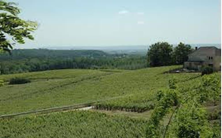 les vignes, un été