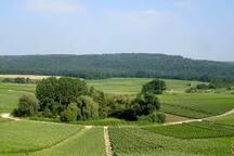 Joli point de vue sur les vignes