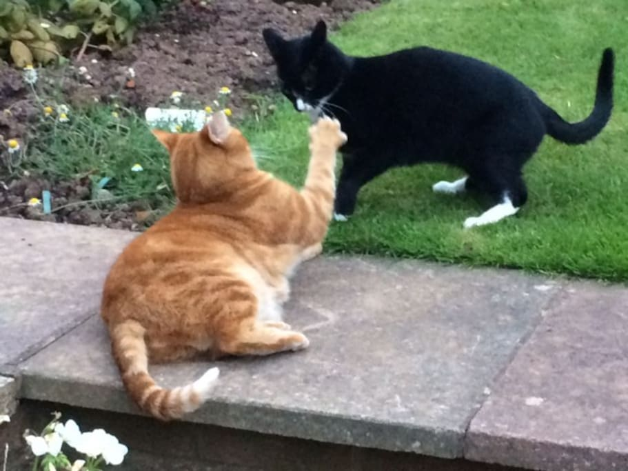 Peri and Arfur our resident cats