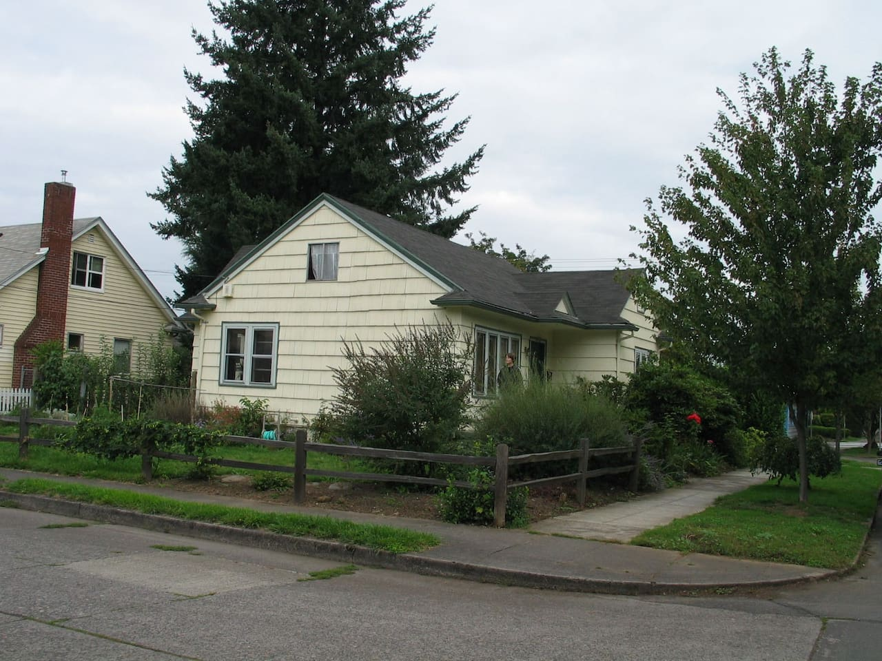 Corner/side of the house, with the biggest Doug fir on our block.