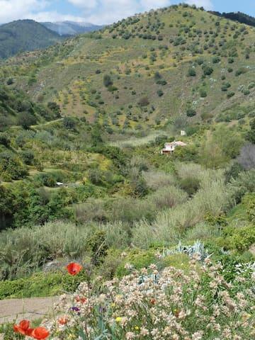 finca con rio, frutales y huerto - Tolox