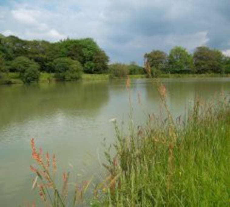 The coarse fishing lake is stocked with a variety of Carp and a good range of silver fish.