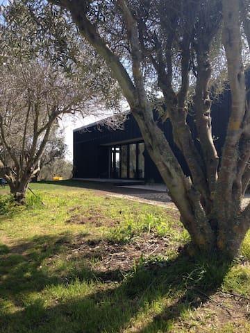 Modern olive grove hideaway - Haumoana