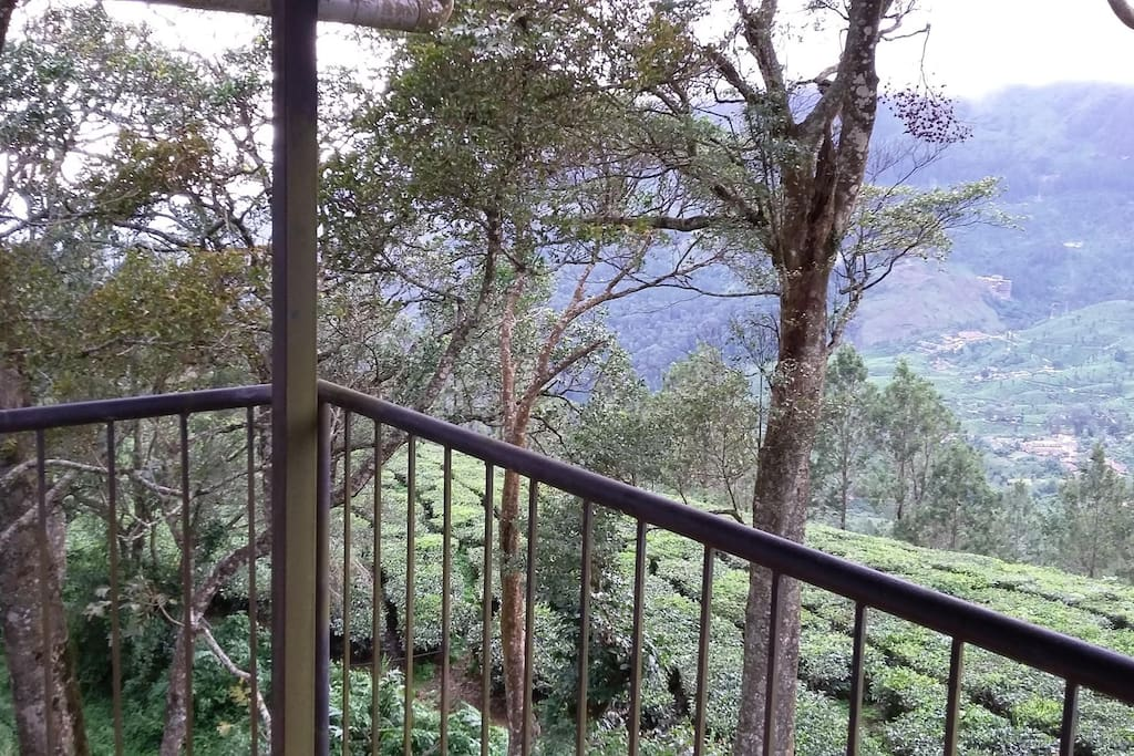View from your private balcony, miles and miles of tea garden and forest