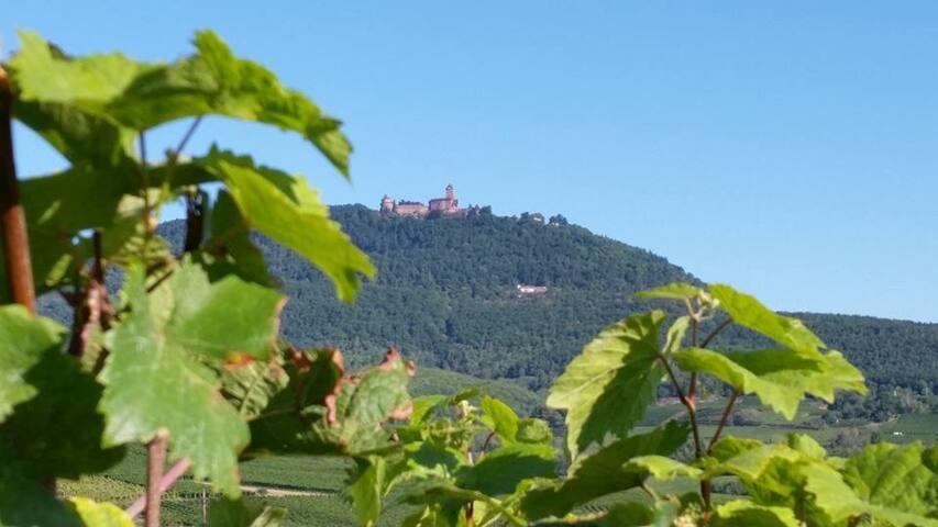 Château du Haut Koenigsbourg, incontournable monument historique d'Alsace, face à la foret noire et aux Alpes suisses. N'hésitez pas à vous rendre sur le site suivant pour de plus amples informations : https://www.facebook.com/ChateauHK/   Non si loin du gîte, vous pourrez l'apercevoir de la fenêtre de la salle de bain. Pour les amateurs de randonnée une heure et demi de marche suffiront pour grimper en haut de cette montagne. Pour les autres, un accès routier est possible.