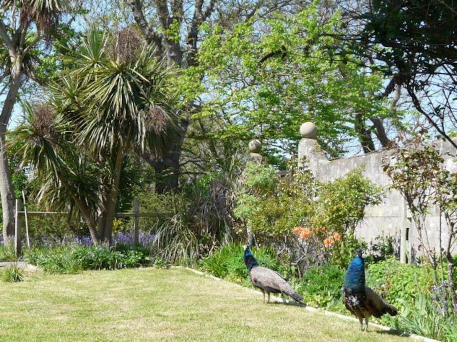gardens with peacocks