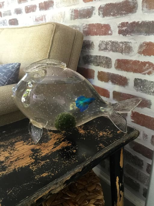 "A fish in a ""fish""bowl."