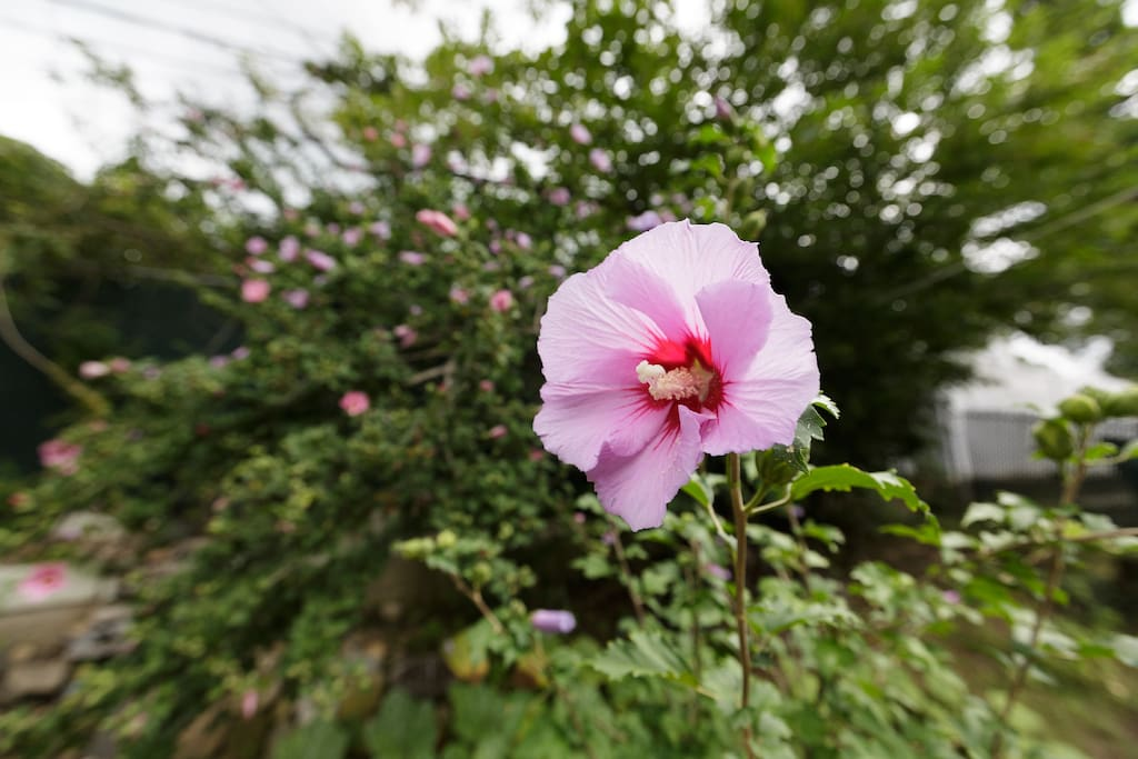 The Flowers in the Backyard