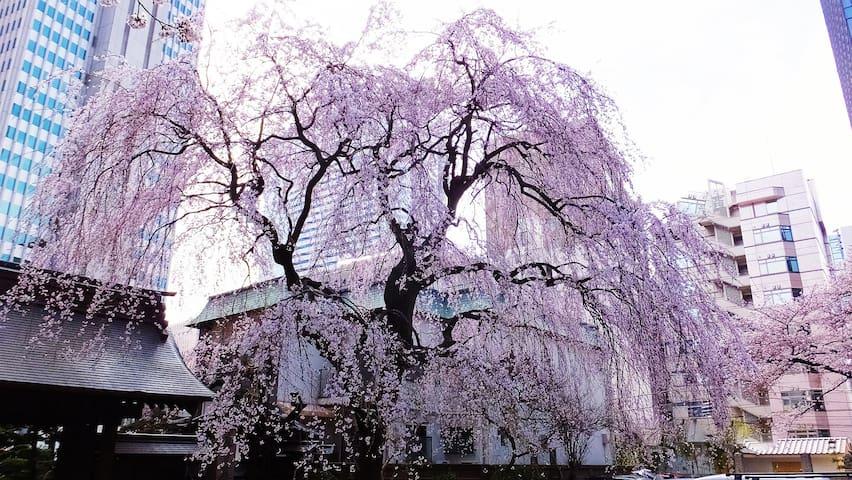 0min NEAREST sta/SHIBUYAarea/Easy accces to Tokyo☆ - Setagaya-ku - Pis