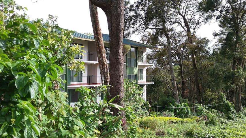 Tea Mount - Nature at its best - Munnar - Wikt i opierunek