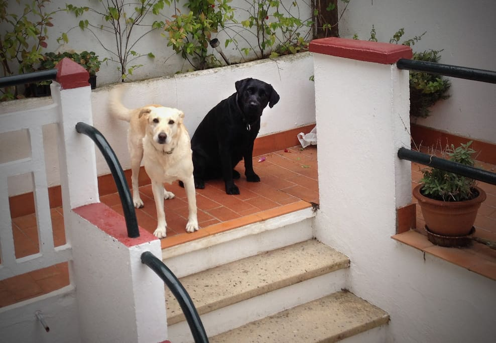 Ella and Gigi, the resident Labradors, will most likely greet you.