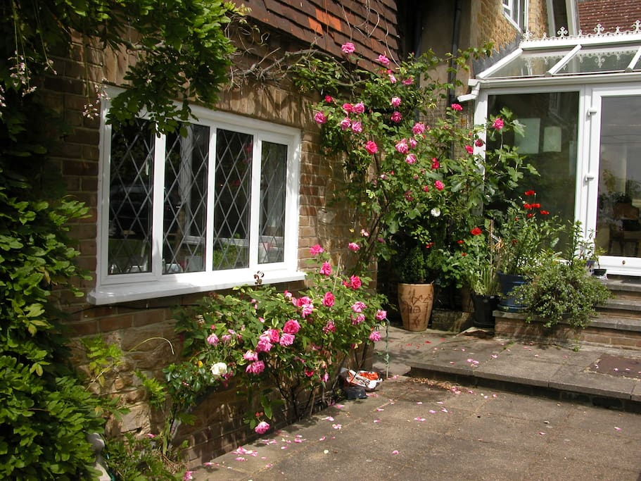 In the summer we have lots of roses, vines, fig trees and other plants and flowers to enjoy.