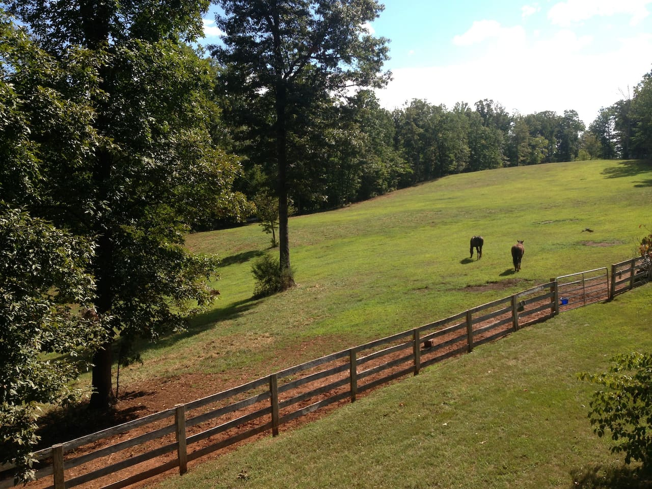 Horses are your neighbors...view from the kitchen window and just outside your door.