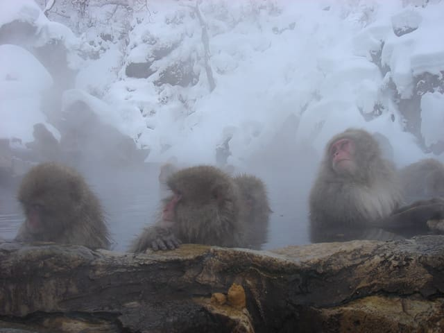 [Dorm]Stay at traditional RYOKAN near Snow monkey - Yamanouchi-machi - Other