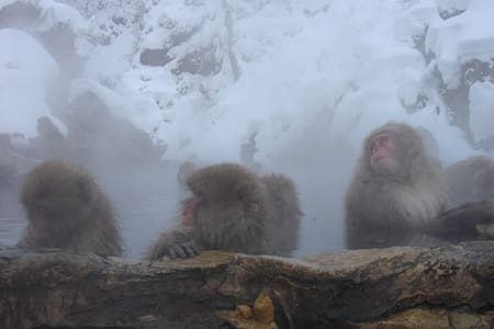 [Dorm]Stay at traditional RYOKAN near Snow monkey