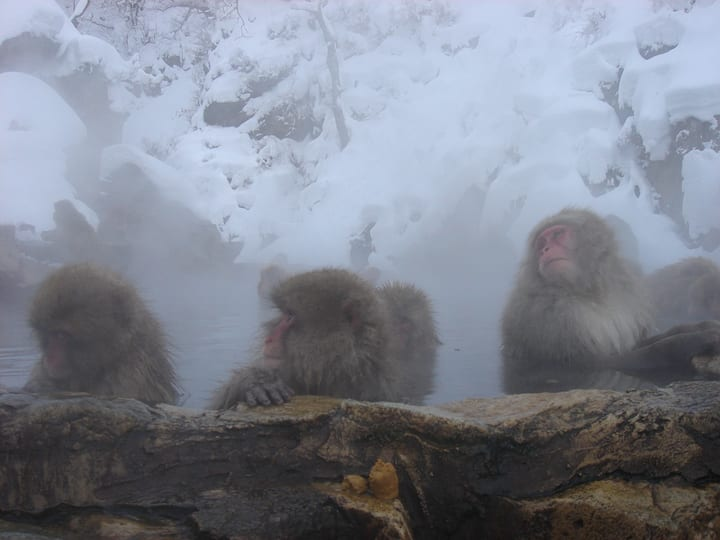 [Dorm]Stay at traditional RYOKAN near Snow monkey