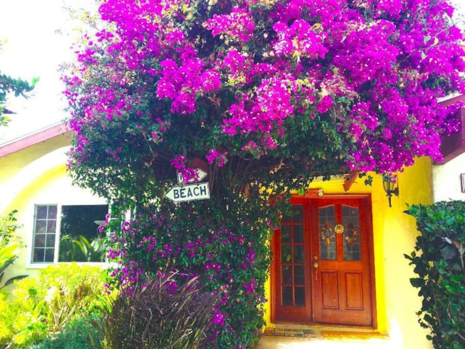 Welcome to Carlsbad Village by-the-Sea...Mucho Colores Flores!