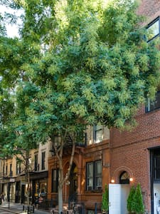 Gorgeous West Village 1-bdm apt