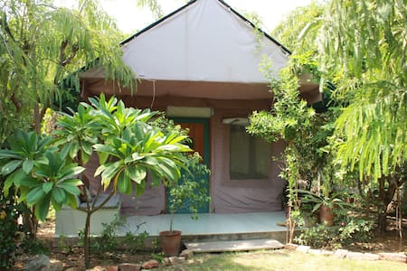 Organic Farm & Resort in Pushkar -T - Pushkar - Zelt