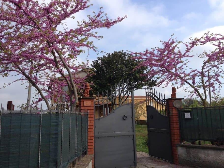 The gate to our Villapereli