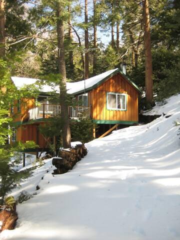 Falling Cedar Cabin