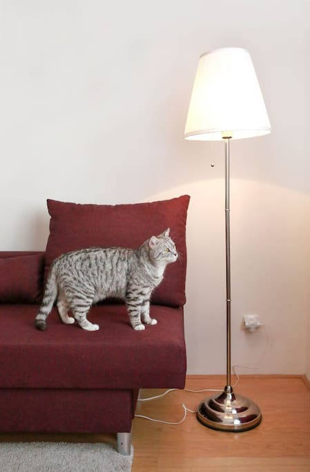 Our cat Amour is so curious.. He took part in photo shoot! But dont worry - he will not live with You:)
