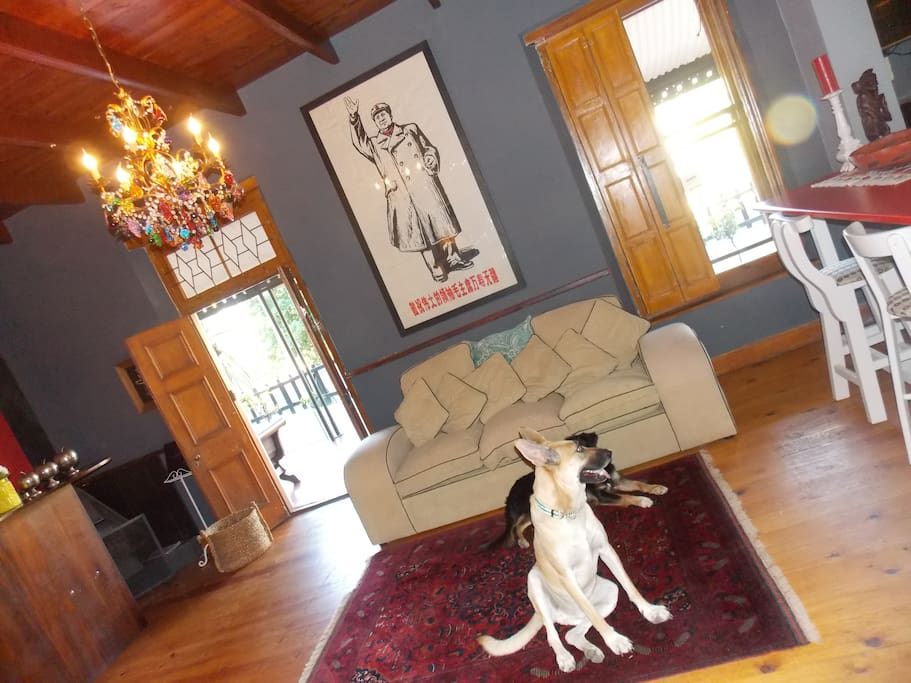 The lounge - and our two dogs