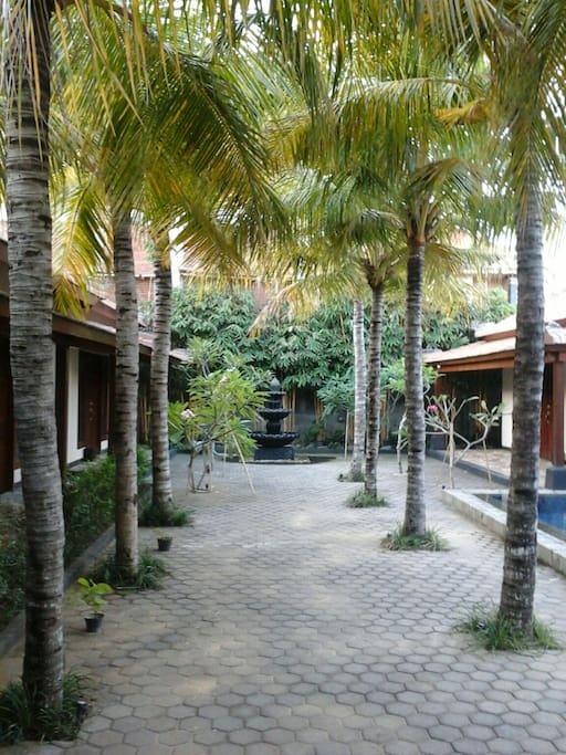 Huge Tropical Garden.