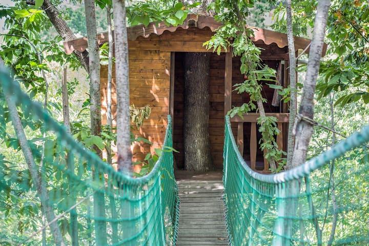 Casa sull'albero nel bosco