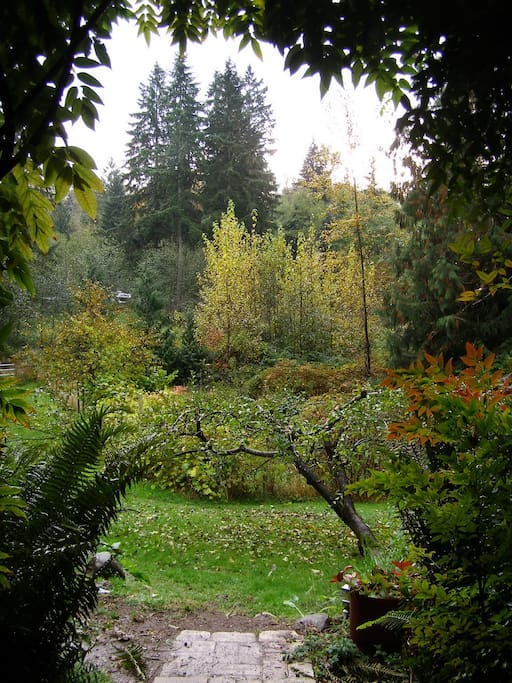 Early fall looking out from the back of the house.