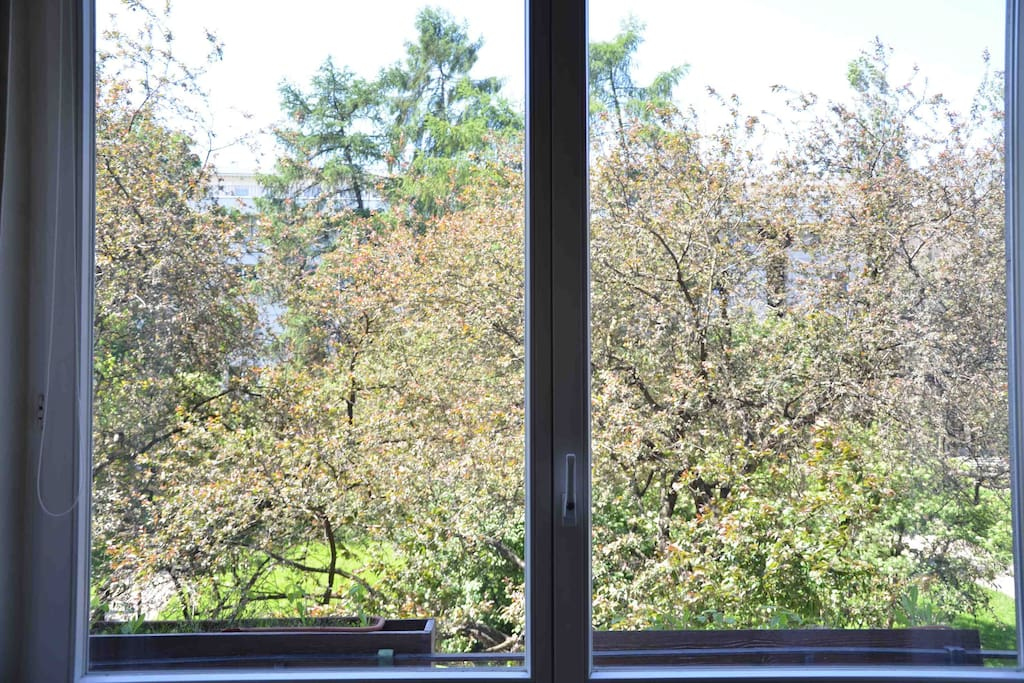 window - view from the apparment, in spring time