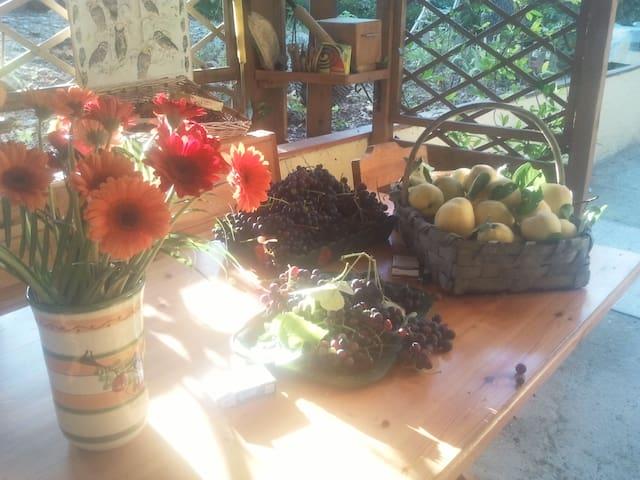 Pace, natura, gastronomia, animali! - Cassinelle  - Inap sarapan