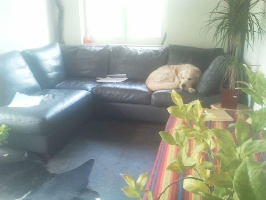 Le petit salon avec canapé-lit