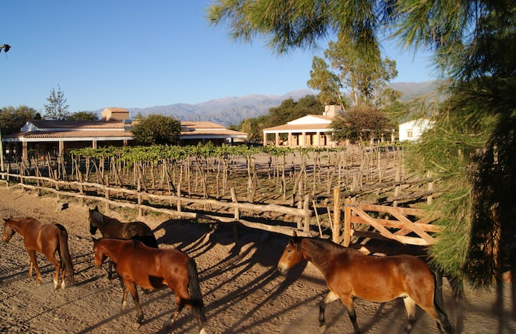 La Vaca Tranquila - Cafayate - San Carlos - Oda + Kahvaltı