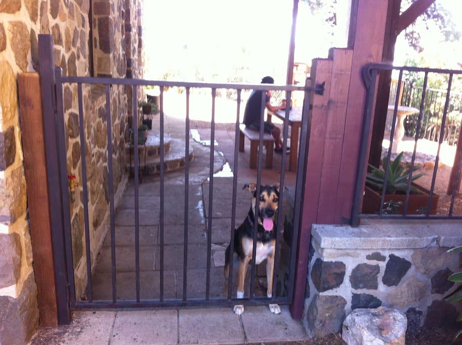 Outside gated yard for dog