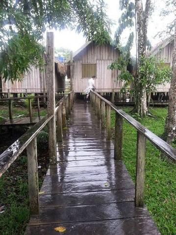 Amazonas Farm