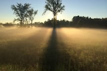 Misty morning sunrise in the meadow across the dirt road from the cabin.