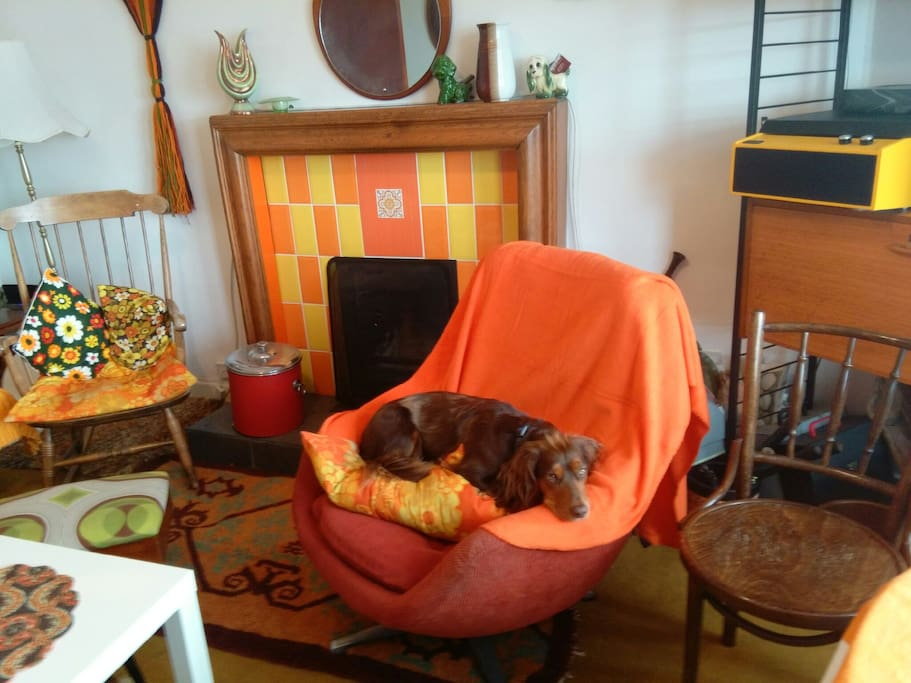 This dog is not included, but dogs are welcome (property professionally cleaned between visits)