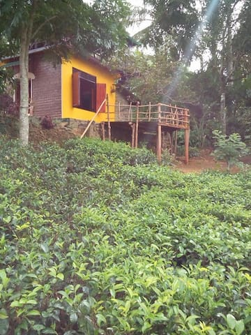Family Hide out  in tea garden  - Passara - Bed & Breakfast