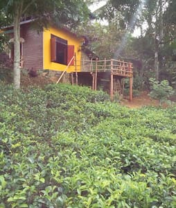 Family Hide out  in tea garden  - Passara