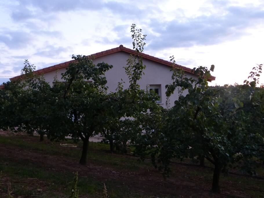 Champs d'abricotier entourant la maison...