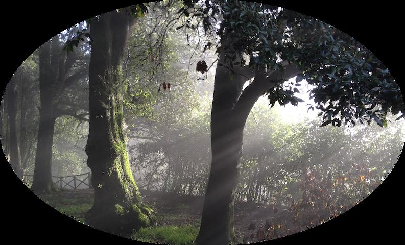 Il bosco al mattino